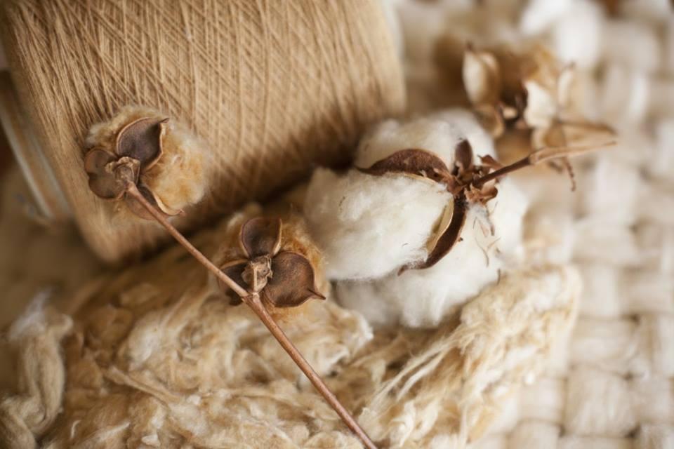 Tại sao bạn nên mặc đồ cotton hữu cơ